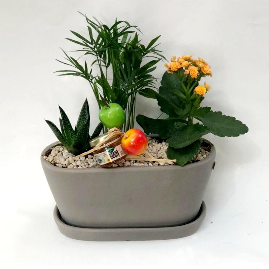 3 סוגי צמחים באדנית קרמיקה
