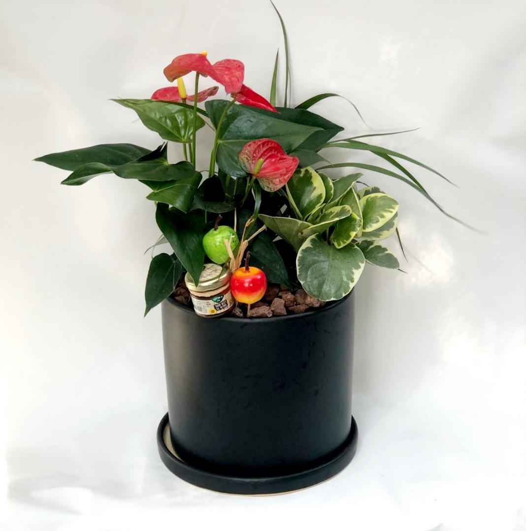 מיקס צמחים בכלי קרמיקה מעוצב