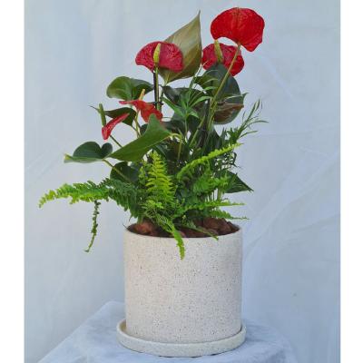 קוקטייל צמחים 2