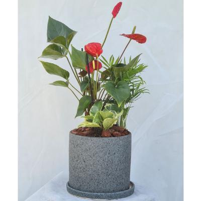 קוקטייל צמחים 3