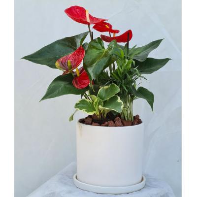 קוקטייל צמחים 4