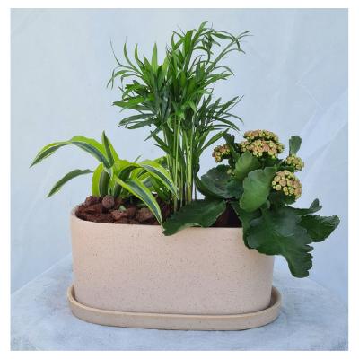 קוקטייל צמחים 5