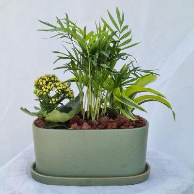 קוקטייל צמחים 6