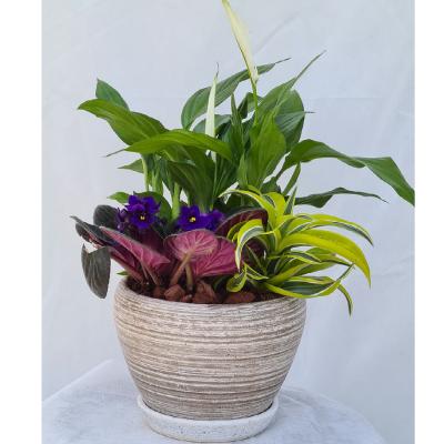 קוקטייל צמחים 10
