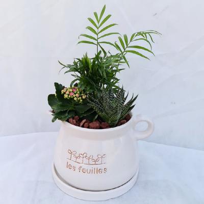 קוקטייל צמחים 11